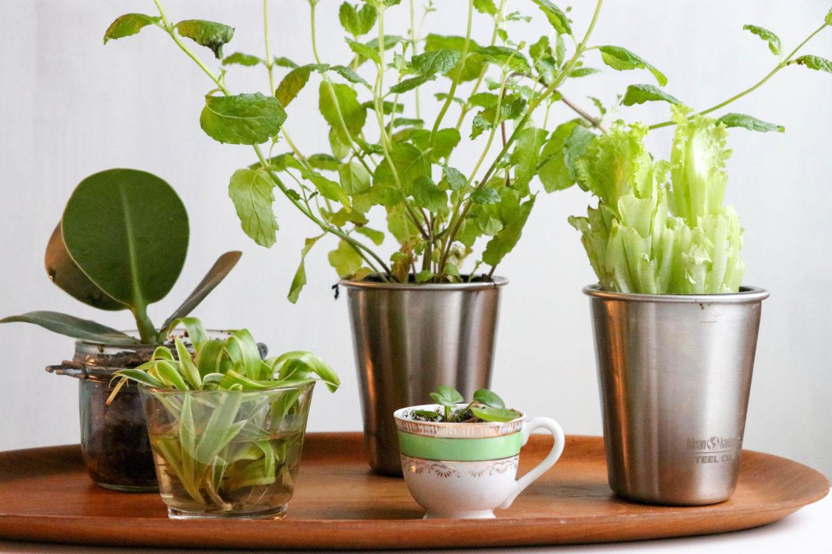 Replanting – plantera på nytt!